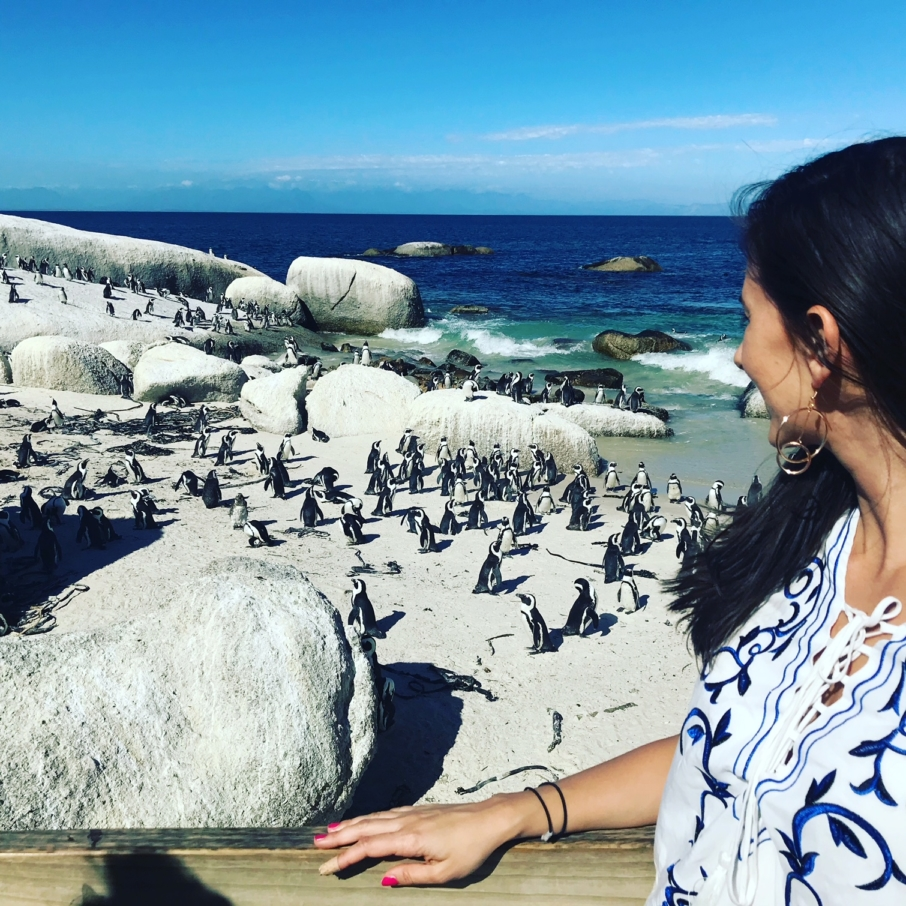 Visiting the penguins at Boulders Beach