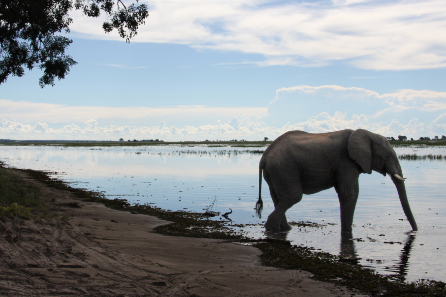 First Safari in Botswana Chobe River