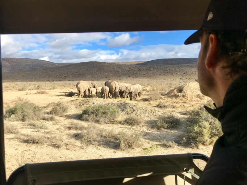 Safari at Sanbona
