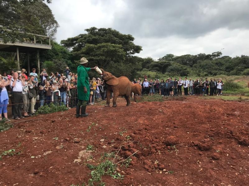 24 Hours in Nairobi Elephant Orphanage